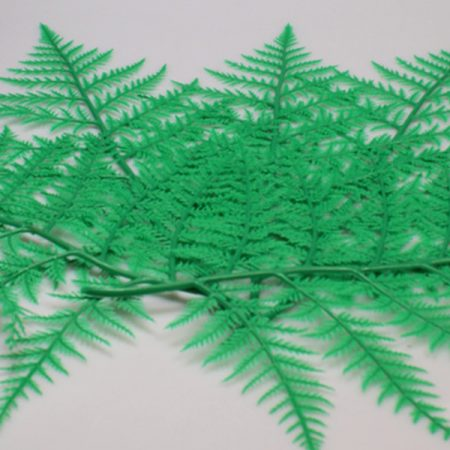 Butchers Green Fern